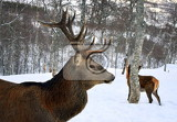 nice deer in the forest