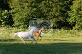 Fotografie beautiful horses free running in spring pasture meadow