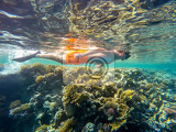 Fotografie young boy snorkel swim in underwater exotic tropics paradise with fish and coral reef beautiful view of tropical sea marsa alam egypt summer holiday  vacation concept