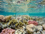 Fotografia beautiful colorful coral garden in red sea with fantastic shapes and colors with fish marsa alam egypt