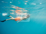 Fotografie young boy snorkel swim in red sea marsa alam egypt summer holiday  vacation concept