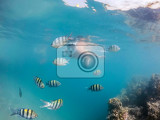 Fotografie woman snorkel swim in underwater exotic tropics paradise with school of fish and coral reef beautiful view of tropical sea marsa alam egypt summer holiday vacation concept