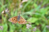 Fotografie butterfly on grass field