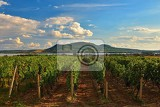Photo vineyards at sunset in autumn harvest ripe grapeswine region southern moravia  czech republic vineyard under palava