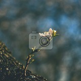 Fotografie spring tree beautiful flowering almond