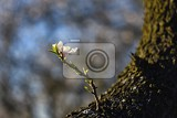 Photo spring tree beautiful flowering almond