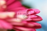 spring flower beautiful macro shot of water droplets natural colored background