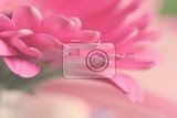 Fotografie beautiful colorful daisy flowersgerbera spring background  garden