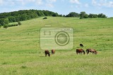 Fotografie beautiful horses grazing freely in naturebeautiful natural colored background with wild animals