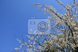 Photo beautiful blooming fruit tree branch beautifully flowering tree white and pink blossoms with sunshine and blue skies nice seasonal nature blurred background in spring