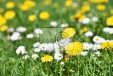 Fényképek meadow with flowers classical natural spring background with blooming flowers