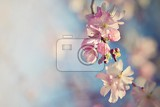 beautiful blossom tree nature scene with sun in sunny day spring flowers abstract blurred background in springtime