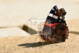 Fotografie beautiful butterfly sitting on the ground