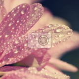 Fotografie macro shot of drops on flower beautiful natural pink blurred background