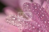 macro shot of drops on flower beautiful natural pink blurred background