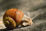 beautiful snail with shell in nature natural colorful background with sun