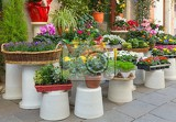 Fényképek colorful flowers at the entry to flower shop in venice italy selective focus