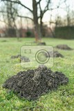 earth mound of a mole on the garden mound of a mole on the meadow