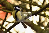 Fotografie a beautiful shot of a bird on a tree in nature parus major