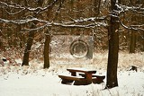 Fotografie winter landscape  frosty trees in the forest nature covered with snow beautiful seasonal natural background