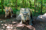 big model of prehistoric dinosaur triceratops in nature realistic scenery