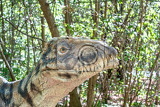 Photo model of dangerous prehistoric dinosaurs raptor in wildlife