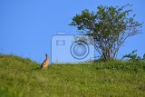 hare  bunny and tree spring natural background with animal