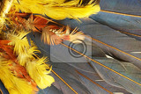 feather color texture as very nice abstract background