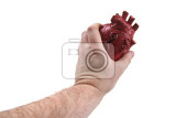 plastic human heart isolated on the white background