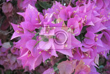 Fotografie violet flowers as very nice nature background