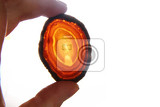 agate gem in human hand  isolated on the white background