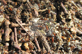 ant colony as nice natural insect background