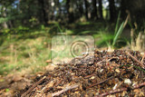 Fotografie ant colony as very nice animal background