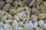 Fotografia abstract sea shells texture as very nice natural background