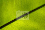 green fern plant texture as very nice natural background