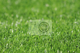 Fényképek green plastic grass texture as  soccer background