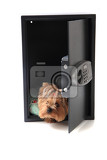 dog in the safe isolated on the white background