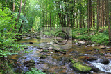 small river in the green forest from the spring