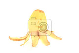 potato figure isolated on the white background