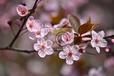 Photo springtime beautiful flowering japanese cherry  sakura colorful background with flowers  and sun on a spring day
