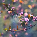 spring blossom background beautiful nature scene with blooming cherry tree  sakura orchard abstract blurred background in springtime