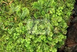 lichen green texture as nice natural background