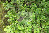 Photo lichen green texture as nice natural background