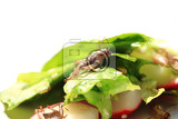 cricket and vegetable salad as nice food background