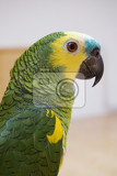 Photo green parrot isolated on the white background