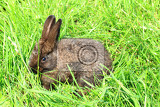 small brown rabbit in the green grass