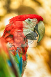 Fotografie head of beautiful red parrot from the zoo
