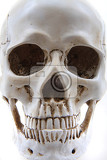 human skull isolated on the white background