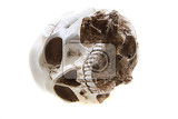 Photo human skull isolated on the white background