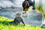 Fotografie young cat and old dog are friends